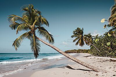 palmtrees on a beach in the caribbean